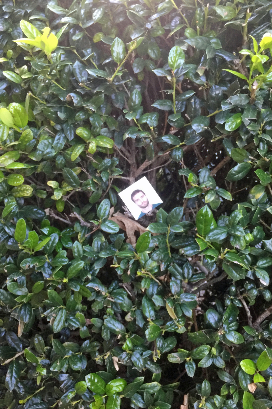 Face in the bushes