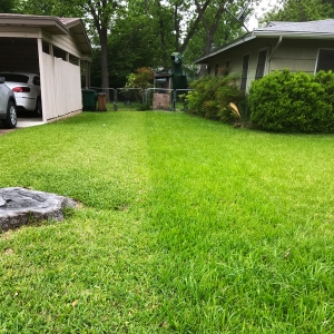 A photo of two lawns, one cut short and one not. In the background is a large metal dinosaur garden ornament.
