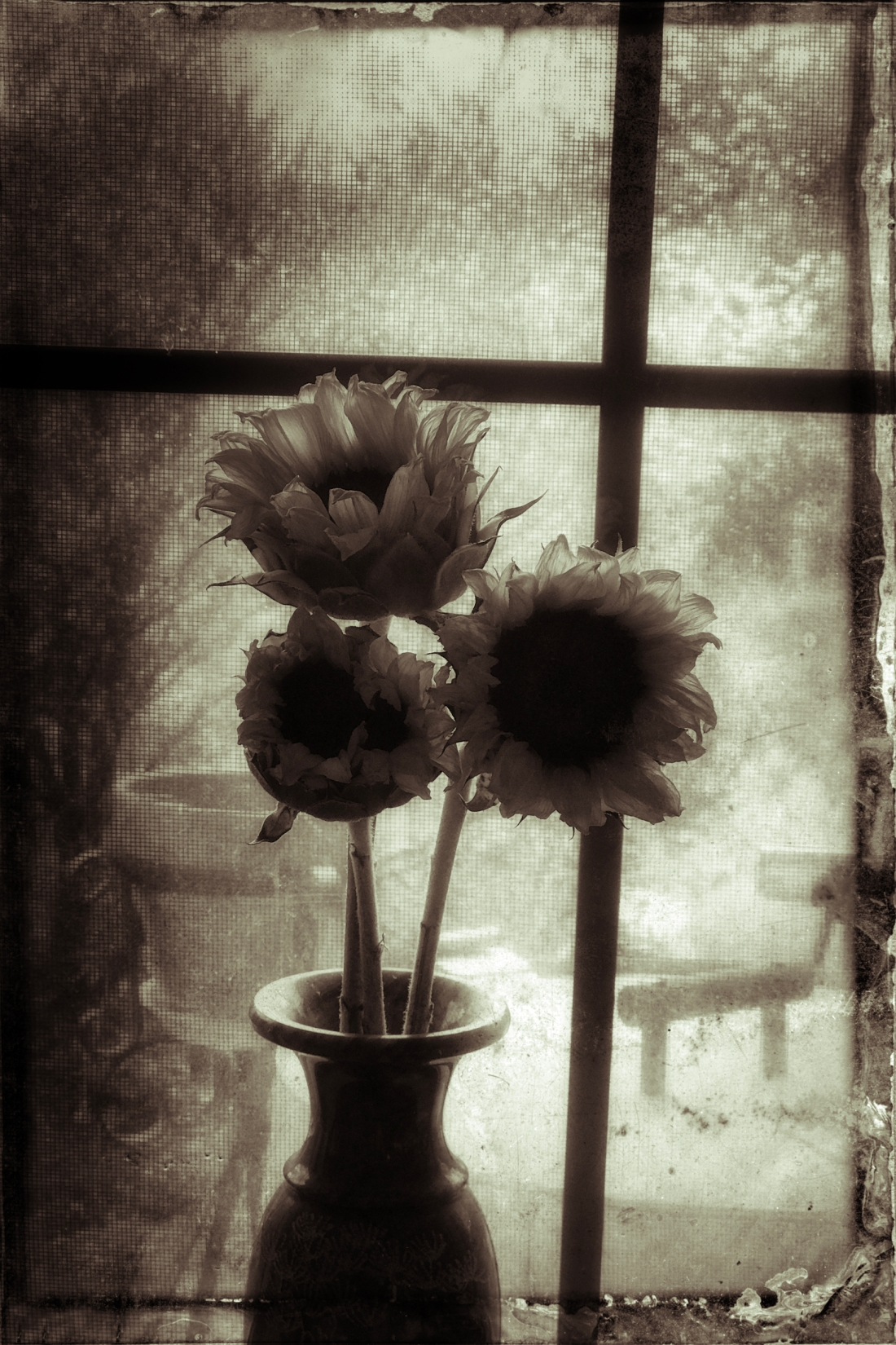 Sunflowers_Remembrance_2_tintype